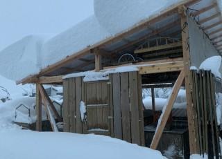 これが豪雪地帯の初雪⁉︎